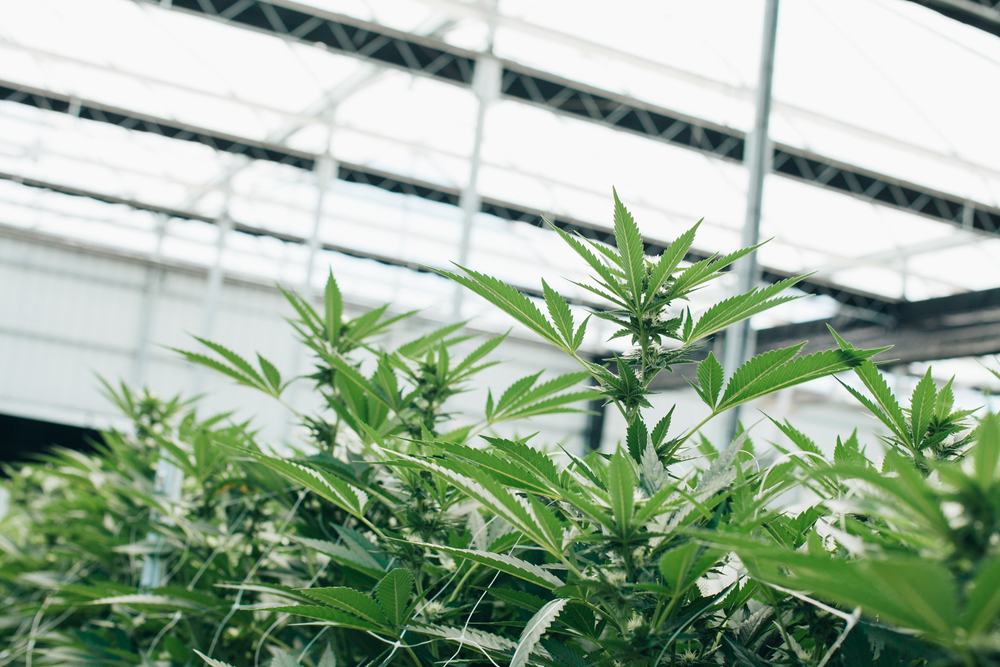 CannTrust Takes Steps Towards Full Regulatory Compliance